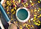 Wegańskie lody czekoladowe z pistacjami i pestkami granatu