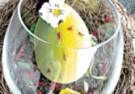 Lody biała czekolada z kwiatem pomarańczy i sorbetem malina pomarańcza
