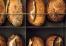 Moxo Bakery