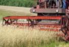 Kosztowna uprawa zbóż
