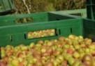 Odkryj moc mini kiwi z polskich upraw