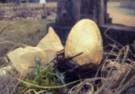 Monoporcja jajo – chałwa/ rokitnik